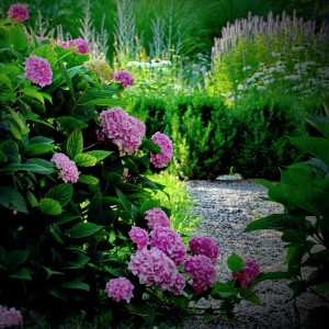 cvetlicna-greda-hortenzija-roznata