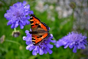 garden-animals-butterfly