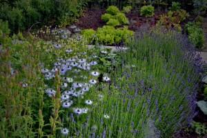 krajinska-arhitektura-zeliscni-vrt