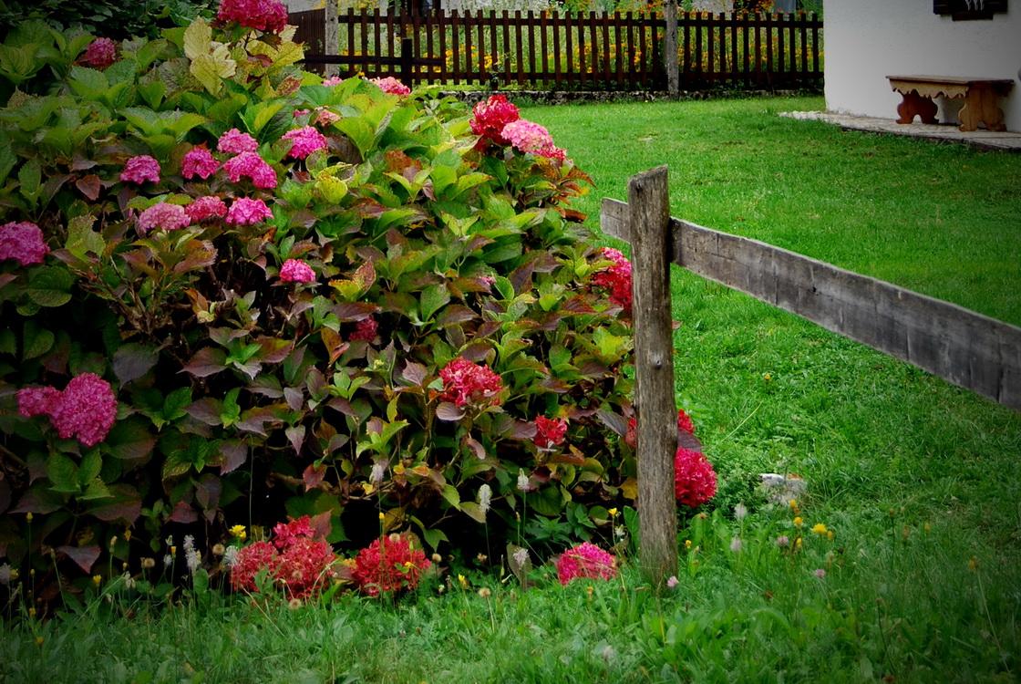 mitja-skrjanec-podezelski-vrt