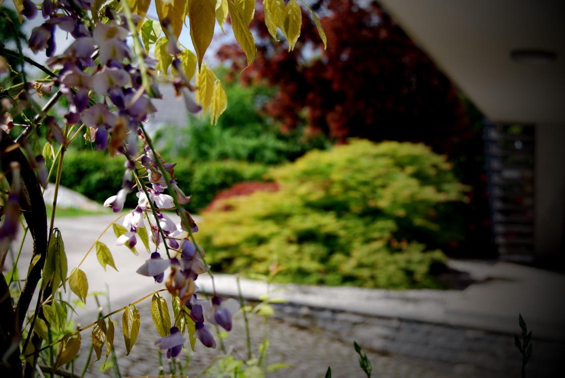 mitja-skrjanec-zasaditev-dvorisce