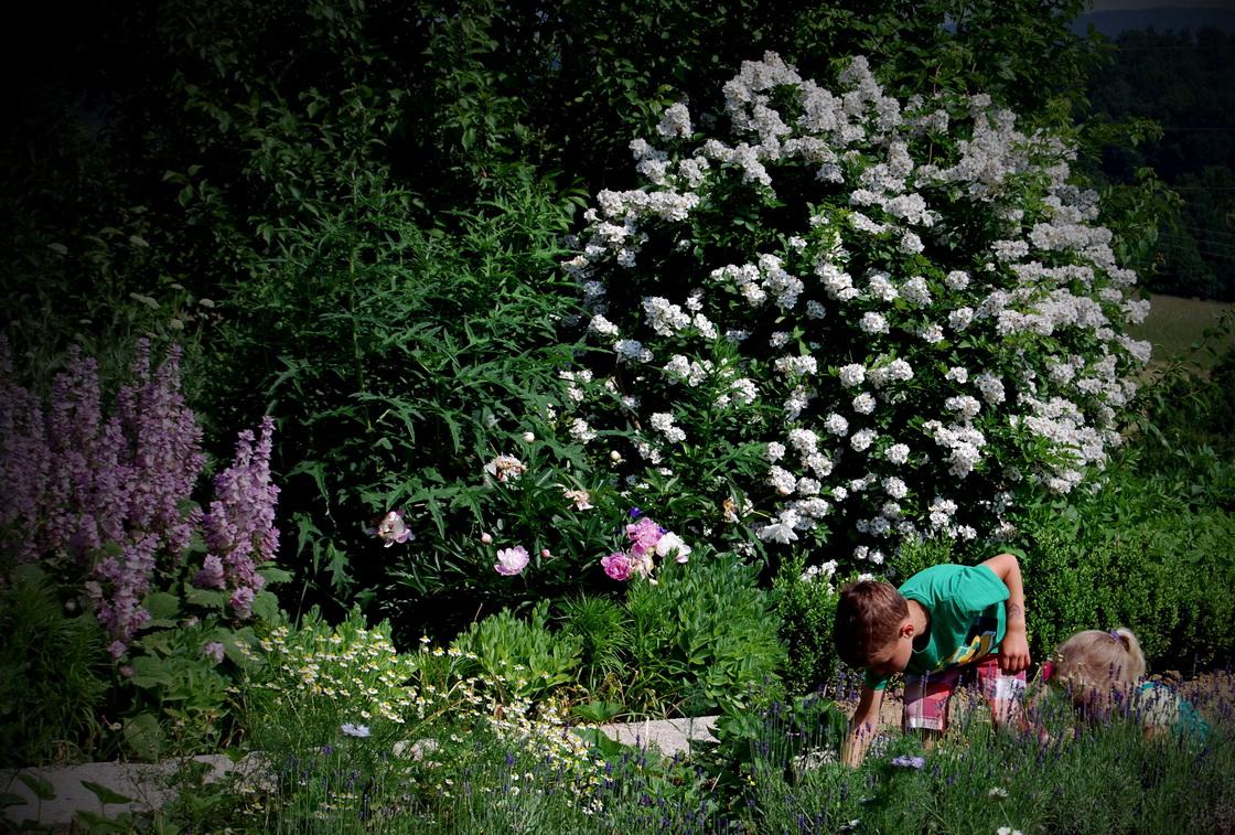 mitja-skrjanec-zeliscni-vrt