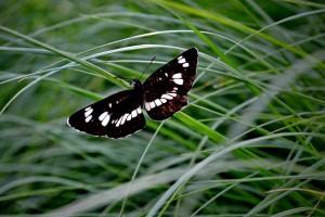 oblikovanje-vrtov-metulj