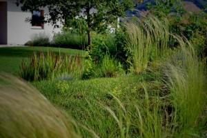 okrasne-trave-v-vrtu