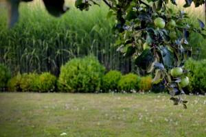 sadovnjak-puspan-trave