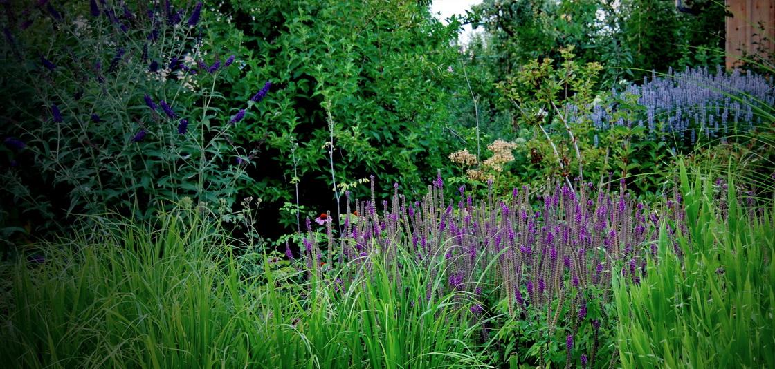trajnice-grmovnice-na-vrtu