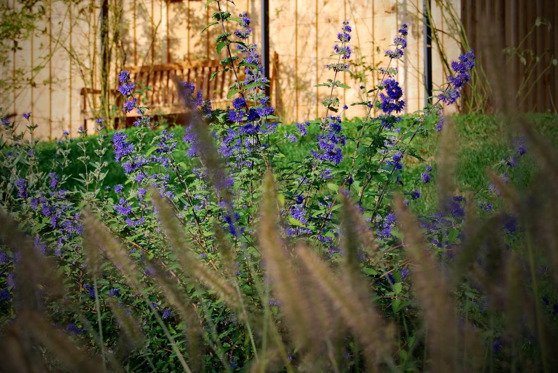 ureditev-okolice-angleski-vrt