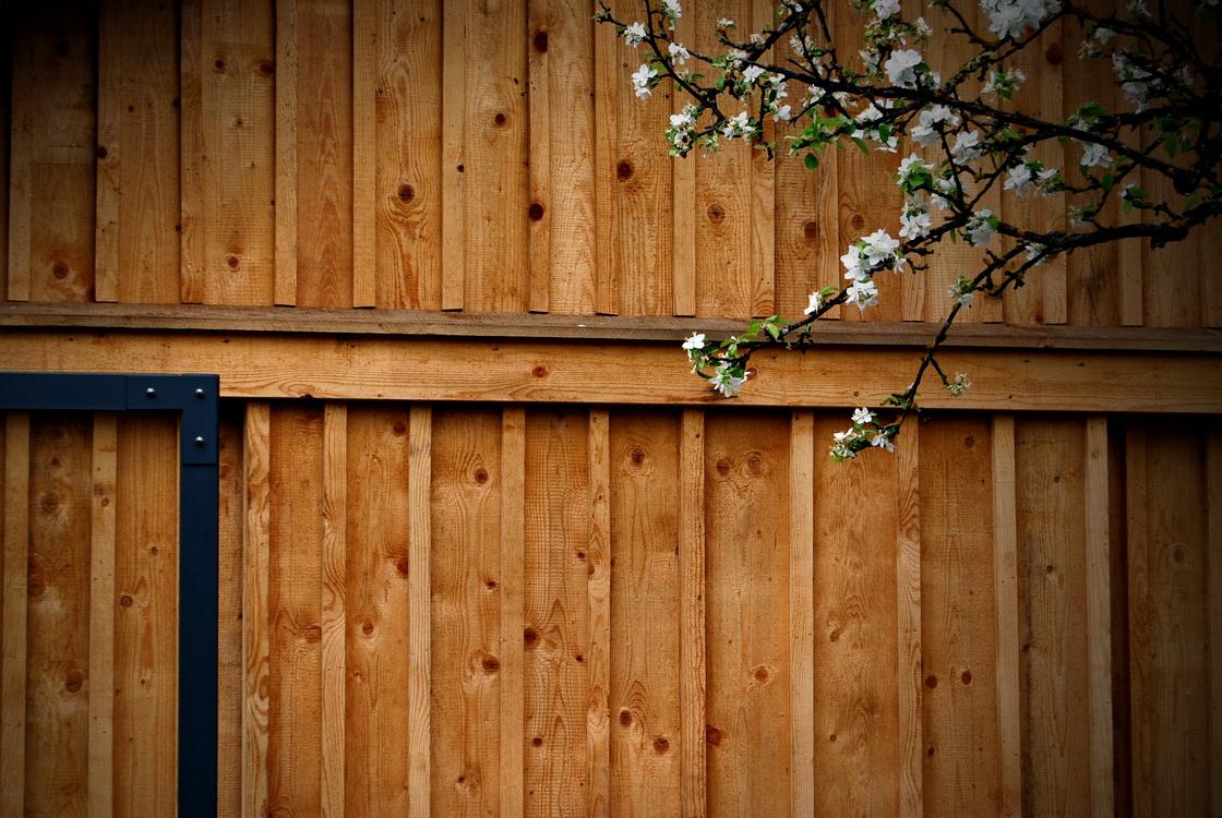 ureditev-okolice-cvetoce-drevo