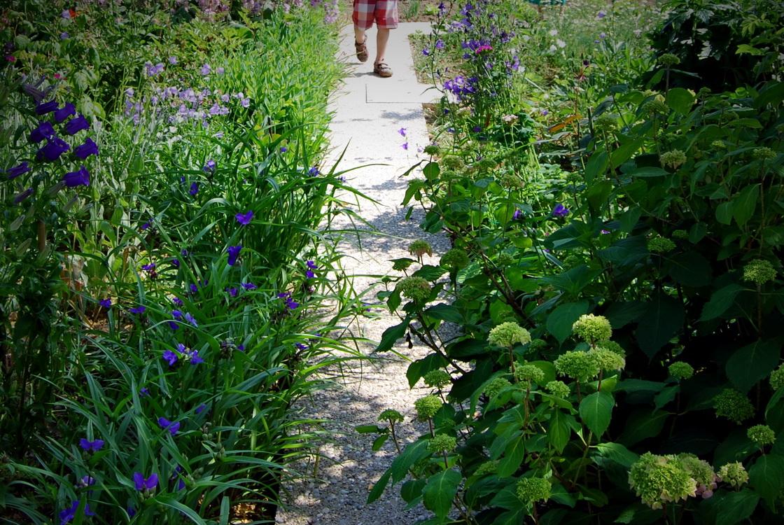 pisani zelenjavni vrt