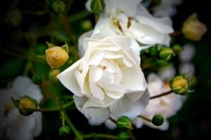 ureditev-okolice-pokrovne-vrtnice