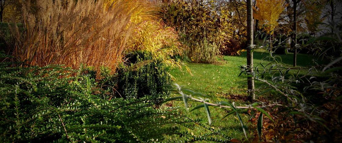 ureditev-okolice-vedno-zelene-grmovnica