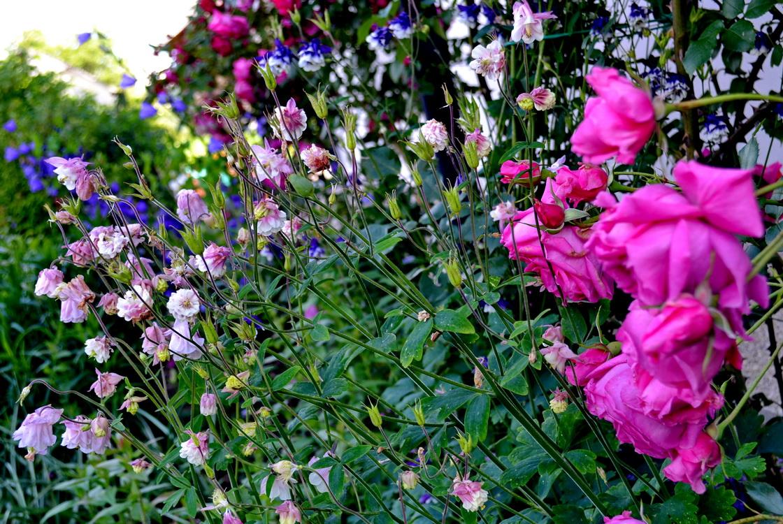 ureditev-okolice-vrtnice
