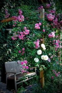 ureditev-pergole-vrtnica-plezalka