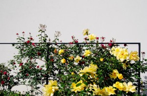 vrtovi-zelena-fasada