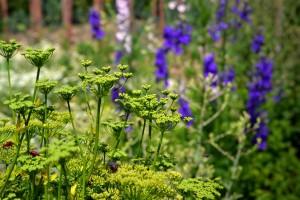 zasaditev-ekoloski-vrt
