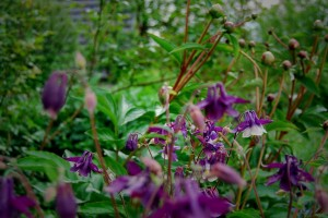 zasaditev-vrtov-orlice-potonika