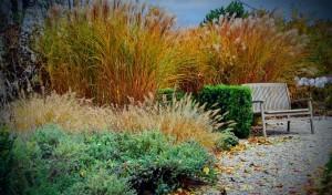 nacrtovanje-vrtov-okrasne-trave-jesen