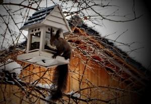ureditev-okolice-veverica