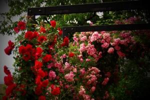 ureditev-okolice-vrtnice-pergola