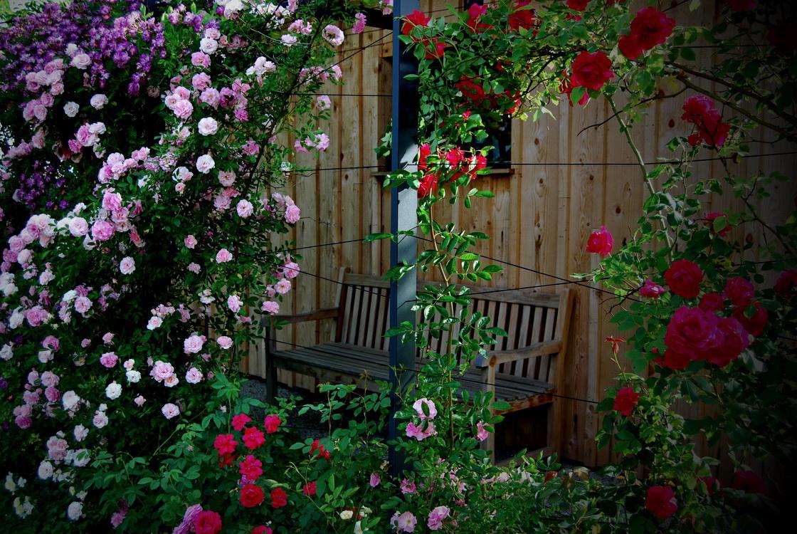 ureditev-okolice-vrtnice-plezalke