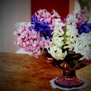 cvetlicni-vrt-hijacinte