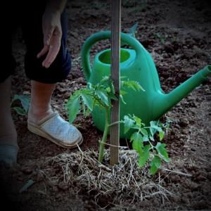 ekoloski-vrt-ureditev