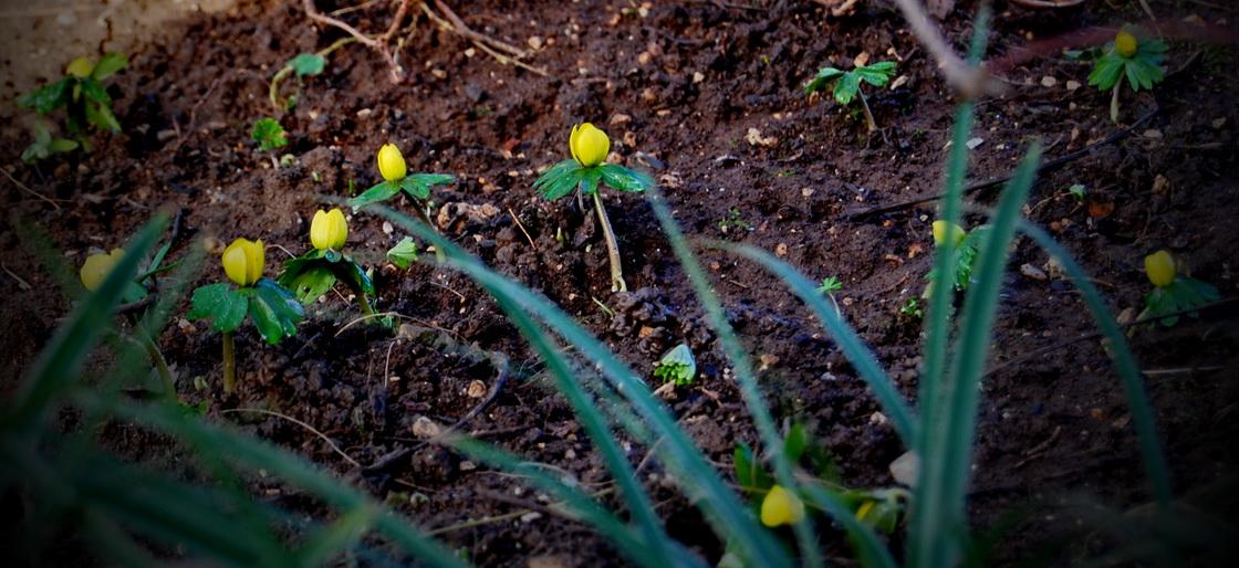 urejanje-vrtov-jarice