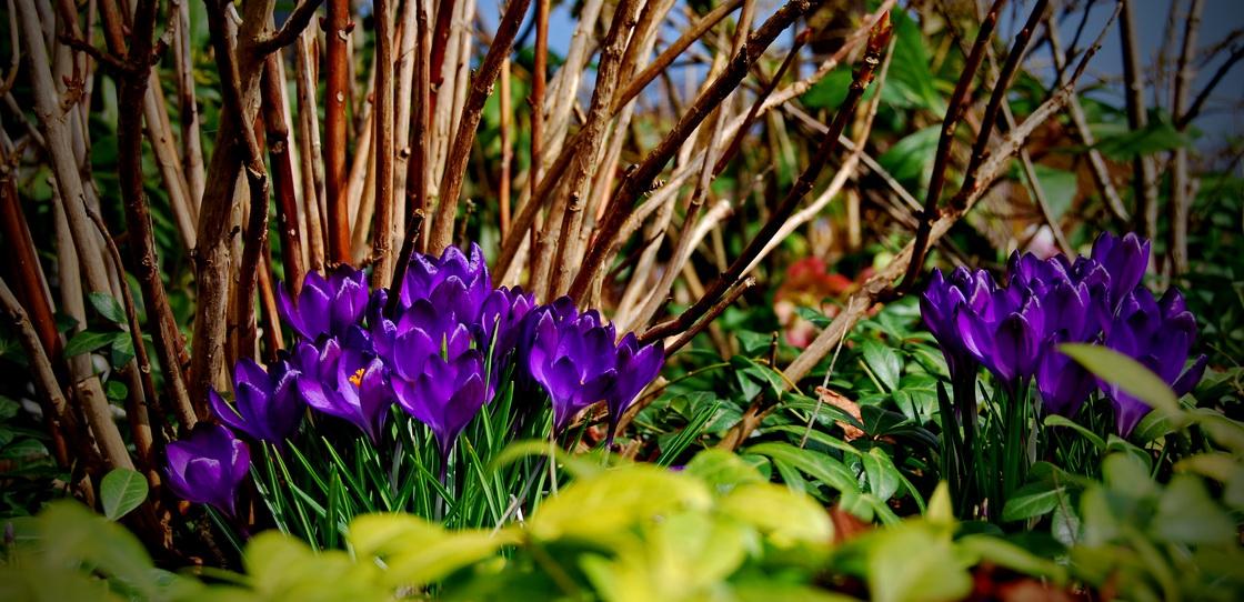vrt-spomladi-cebulnice