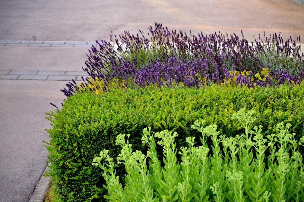 zasaditev-vrtov-trajnice