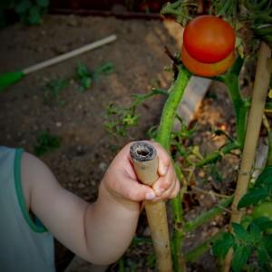 zelenjavni-vrt-vzgoja-otroci
