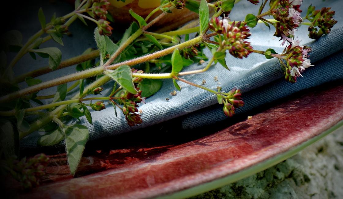 zeliscni-vrt-origano