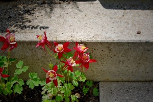detajl-vrt-teraco