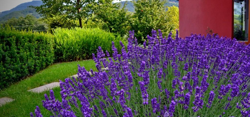 garden-design-landscape