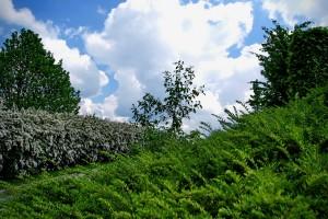 urejanje-vrtov-dvorisce