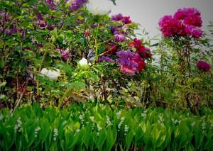 zasaditev-vrt-potonike