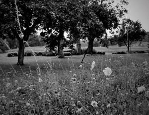 travnik-visokodebelni-sadovnjak