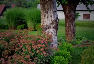 zasaditev-okrasne-trave