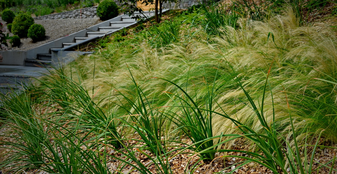vrt-okrasne-trave