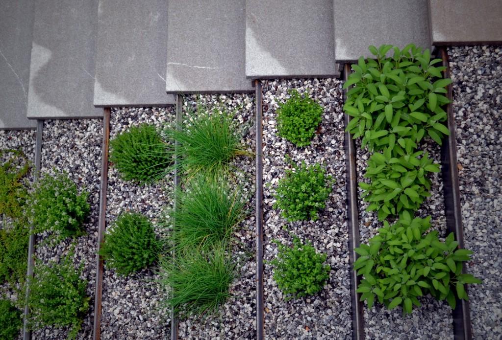 stopnice-zeliscni-vrt