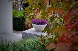 vrt-zasaditev-v-posodah