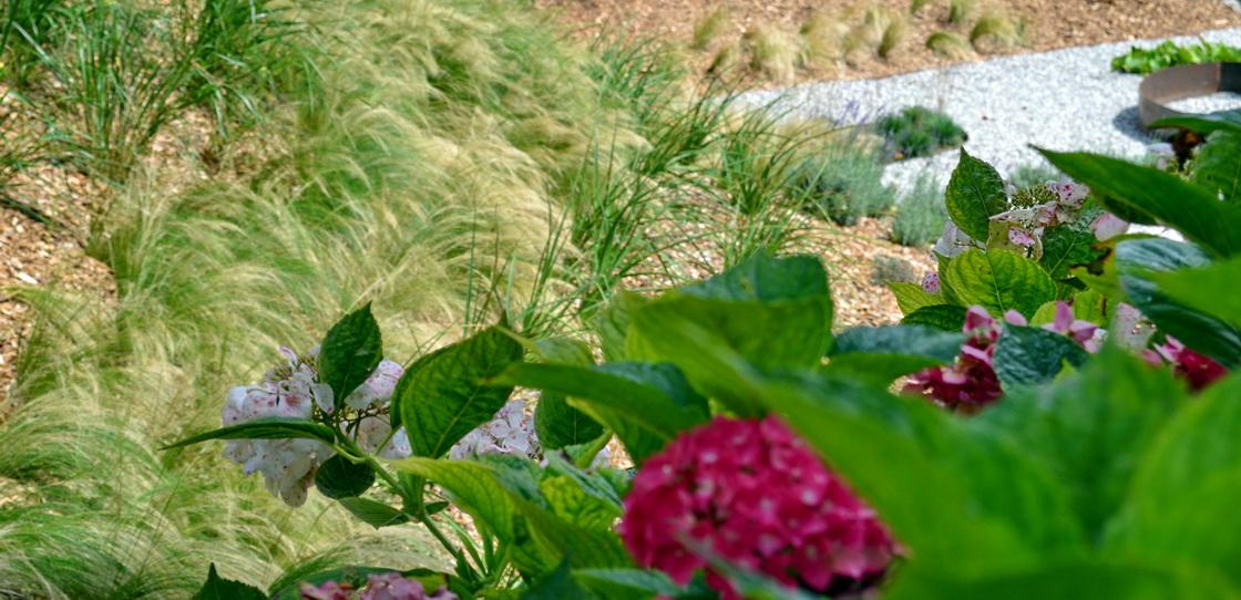 zelena-brezina-zasaditev