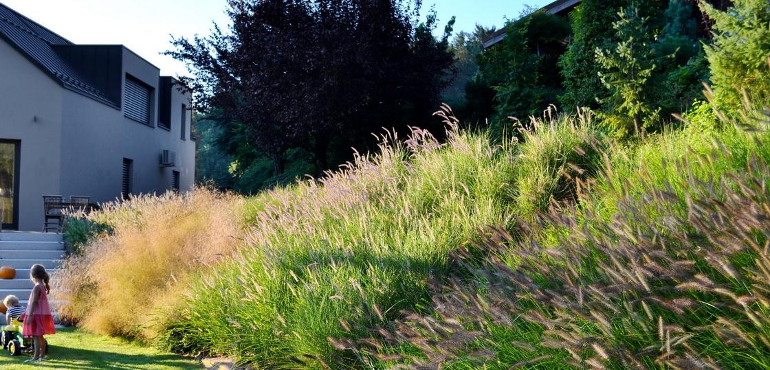 brezina-okrasne-trave-1