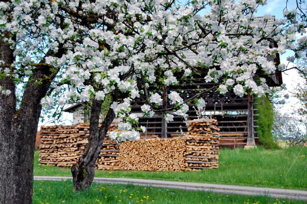 kozolec-sadno-drevje