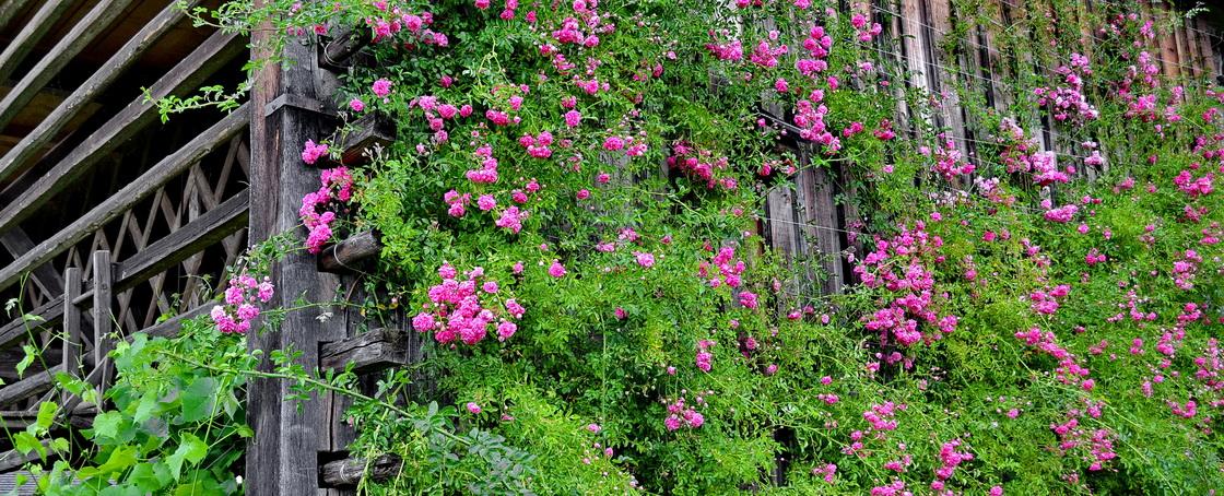 kozolec-toplar-vrtnica