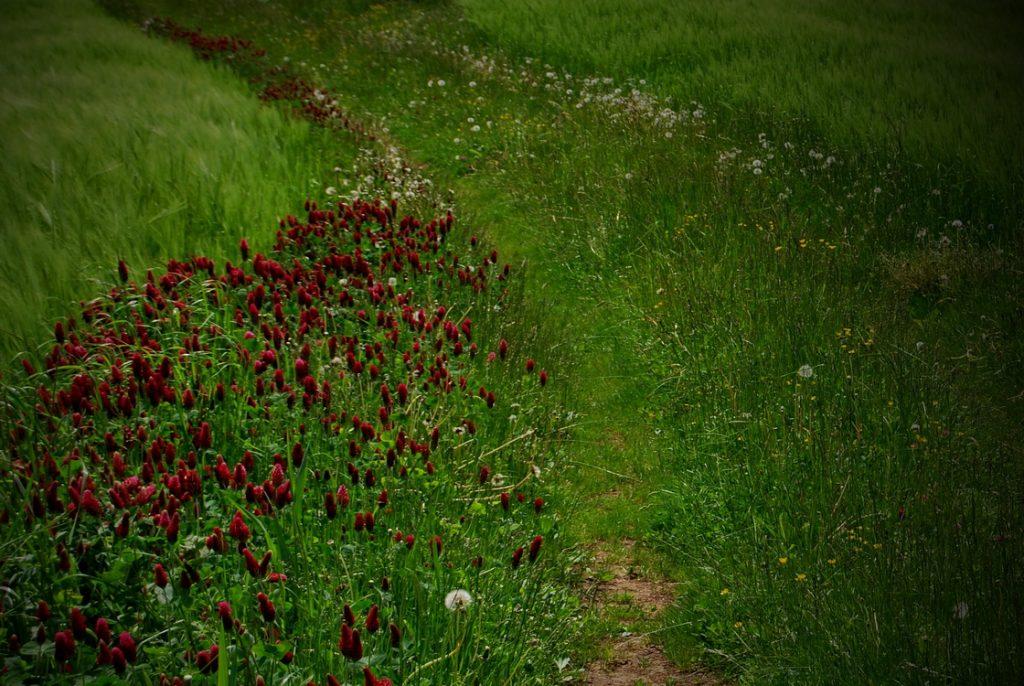 mitja-skrjanec-kmetijska-krajina