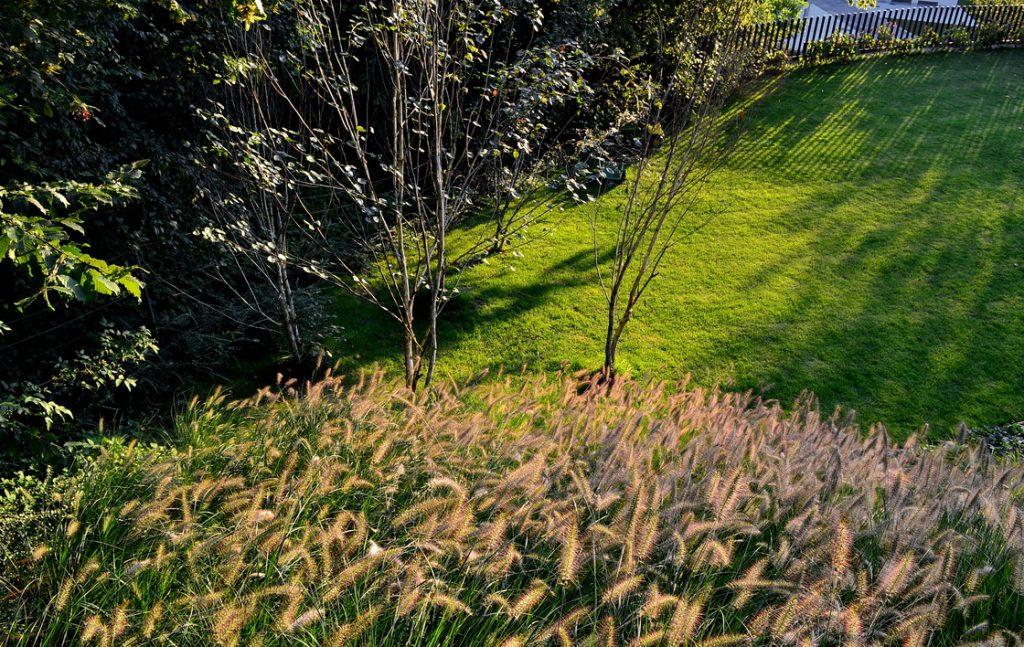 zasaditev-brezine-trave
