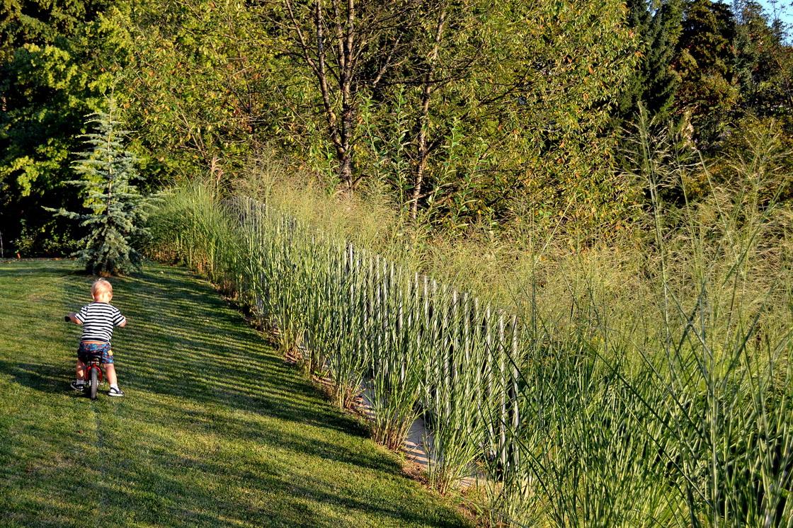 zasaditev-ob-ograji