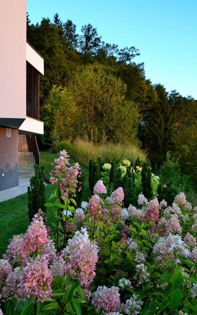 zasaditveni-nacrt-hortenzije